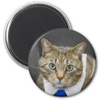 Cute green-eyed brown tabby cat wearing a blue tie magnet