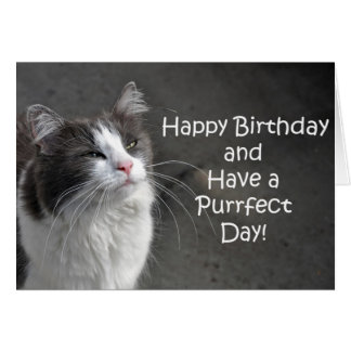 Cute grey and white cat birthday card