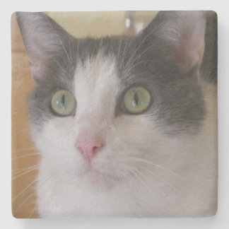 Cute Grey and White Cat Stone Coaster
