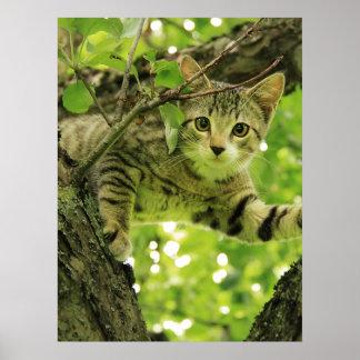 Cute grey cat in a tree print