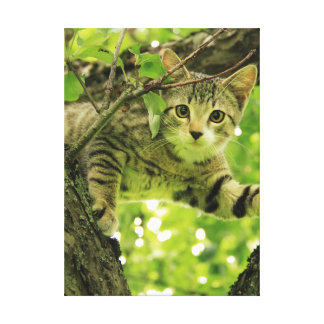 Cute grey cat in a tree stretched canvas print