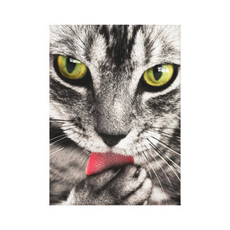 Cute grey cat licking paw gallery wrapped canvas