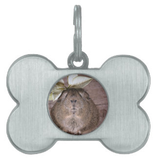 Cute Grey Guinea Pig Wearing a Leaf Hat Pet Name Tag