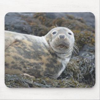 Cute Grey Seal Mouse Pad