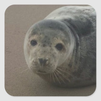 Cute grey seal pup baby on sandy beach