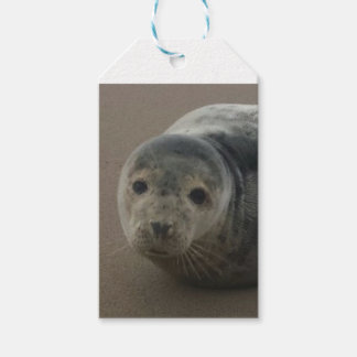 Cute grey seal pup baby on sandy beach gift tags