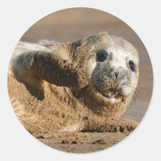 Cute Grey Seal Pup round sticker