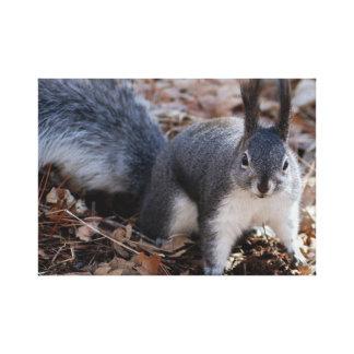 Cute grey squirrel in autumn canvas print