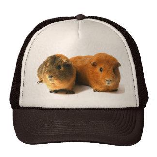 cute guinea pig cap