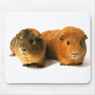 cute guinea pig mouse pads