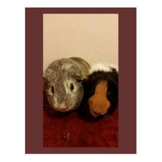 Cute guinea pigs card postcards