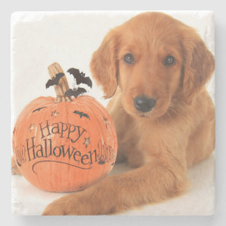 Cute Halloween Puppy With A Pumpkin Stone Coaster