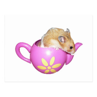 Cute Hamster in a Pink Teapot Photo Postcard