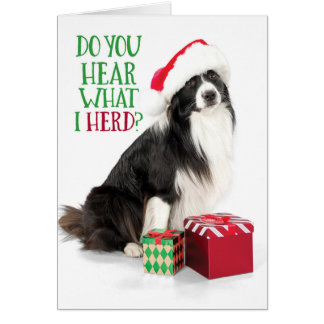 Cute Herding Border Collie With Christmas Gifts Card