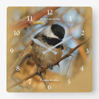 Cute Hopeful Hungry Black-Capped Chickadee Square Wall Clock