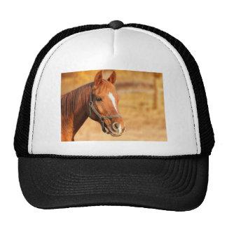 CUTE HORSE CAP