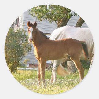 CUTE HORSE FOAL AND MARE CLASSIC ROUND STICKER