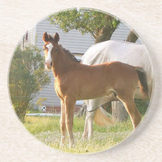 CUTE HORSE FOAL AND MARE COASTER