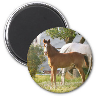 CUTE HORSE FOAL AND MARE MAGNET