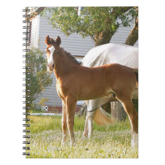CUTE HORSE FOAL AND MARE NOTEBOOK