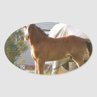 CUTE HORSE FOAL AND MARE OVAL STICKER