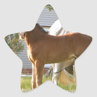 CUTE HORSE FOAL AND MARE STAR STICKER