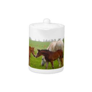CUTE HORSE FOALS