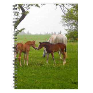 CUTE HORSE FOALS NOTEBOOK