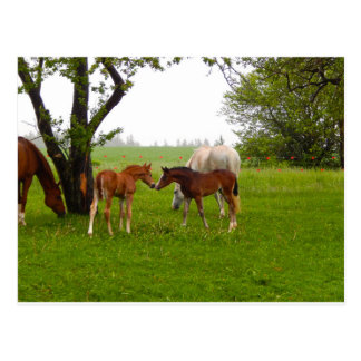CUTE HORSE FOALS POSTCARD