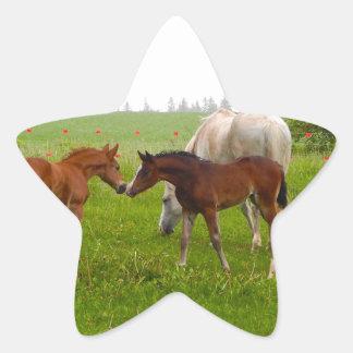 CUTE HORSE FOALS STAR STICKER