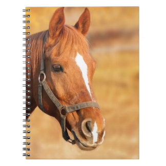 CUTE HORSE NOTEBOOK