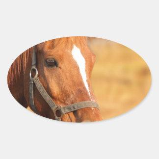 CUTE HORSE OVAL STICKER