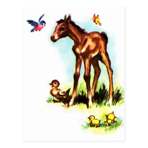 Cute Horse Pony Baby Foal Postcards