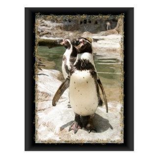 Cute Humboldt Penguin Postcards