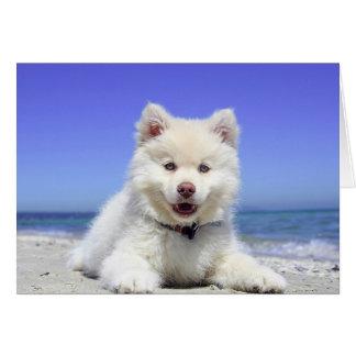 Cute Husky Puppy on Beach Blank Card