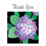 Cute Hydrangea Japanese Floral Fine Art Postcard