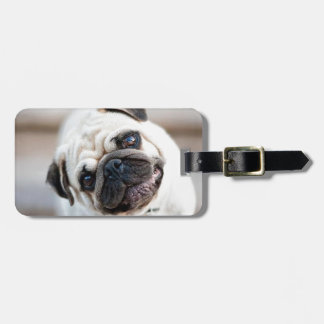 Cute Inquisitive Pug Design Luggage Tag