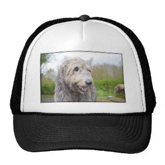 Cute Irish Wolfhound Hats
