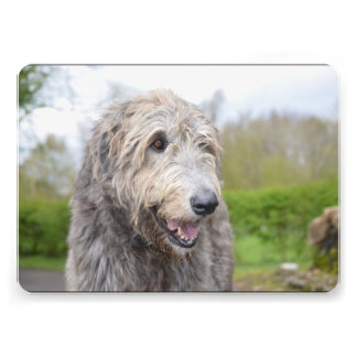 Cute Irish Wolfhound Custom Announcements
