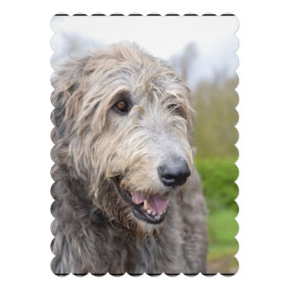 Cute Irish Wolfhound Announcements