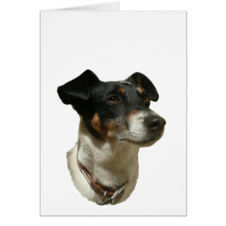 Cute Jack Russell Dog Card
