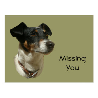 Cute Jack Russell Dog Postcard