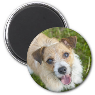 Cute Jack Russell terrier dog photo fridge magnet