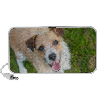 Cute Jack Russell terrier puppy dog doodle speaker
