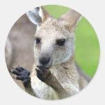 Cute joey kangaroo classic round sticker