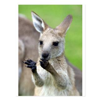 Cute joey kangaroo postcard