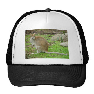 Cute Kangaroo At Perth Zoo. Trucker Hats