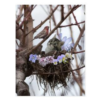 Cute kitten and bird nest Easter postcard