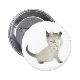 Cute kitten buttons