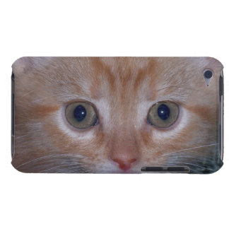 Cute Kitten Barely There iPod Covers